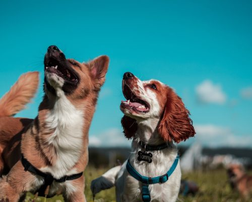 4 Reasons Why Your Dog Is Digging Up Your Favorite Grass?