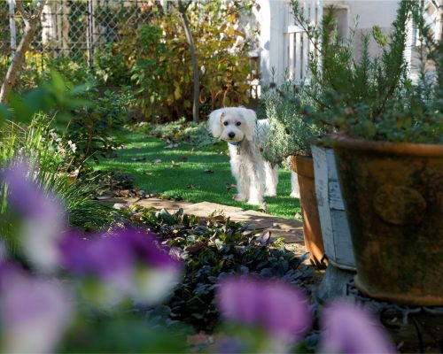 How to Pet-Proof Your Garden or Lawn?